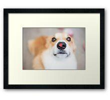 : Corgi - Valentine's Day : Framed Print