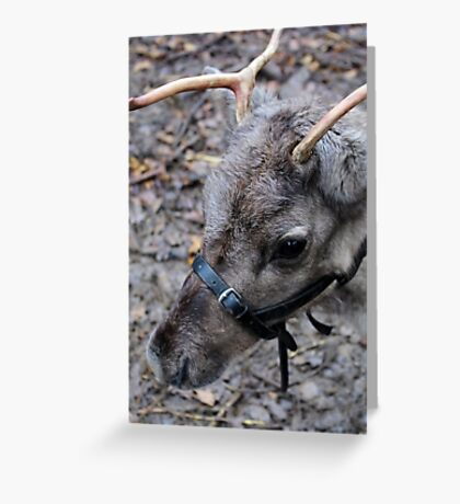 What! No Red Nose. Greeting Card