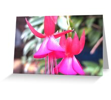beautiful flower in Viet Nam 7 Greeting Card