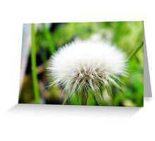 beautiful flower in Viet Nam 8 Greeting Card