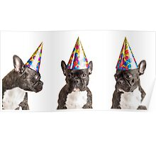 Party Dog Poster