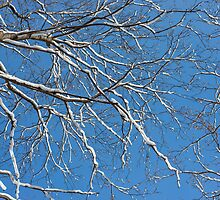 Winter Trees And Blue Sky by Dobromir Dobrinov