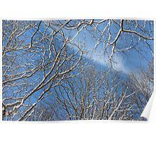 Winter Trees And Blue Sky Poster