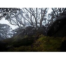 Charlotte Pass - Snowgums view04 Photographic Print