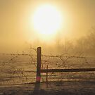 Golden Foggy Sunrise by lorilee