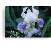 Gardening Purple Canvas Print