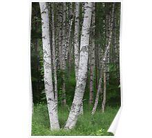 Lapland Green wonders . Poster