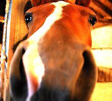 Horse by AlexSzabo