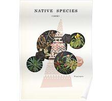 Native Species Poster