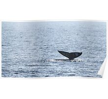 Gray Whale Tail Poster