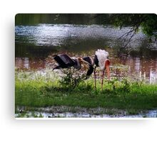 MALE STORK ♥ROMANCING THE FEMALE PAINTED STORK♥-VERSION THREE-THATS AMORE-- VARIOUS APPAREL Canvas Print