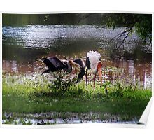 MALE STORK ♥ROMANCING THE FEMALE PAINTED STORK♥-VERSION THREE-THATS AMORE-- VARIOUS APPAREL Poster
