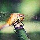 Dragonfly close-up by Tamara Brandy