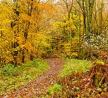 Autumn colours, woodland walk, November 2013 by Hugh McKean
