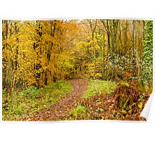 Autumn colours, woodland walk, November 2013 Poster