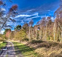 February Gales by vivsworld
