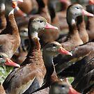 Duck Commander by Dennis Cheeseman
