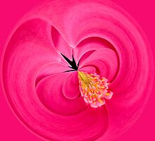 Hot Pink and Round by Anne Gilbert