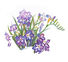 Purple Freesia in Spring Photographic Print