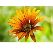 Flor de verano Photographic Print
