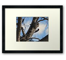 Wood Peckers at Griffith Observatory Framed Print