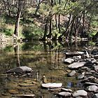Ophir River, Central West NSW by Ruth Durose