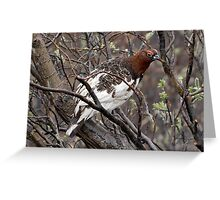 Willow Ptarmigan ~ State Bird of Alaska Greeting Card