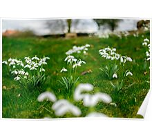 Surreal Snowdrops Poster