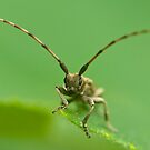 long-horned beetle by davvi