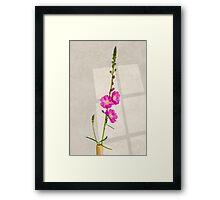 Sidalcea 3 Framed Print