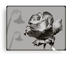 Black and White Red Rose Canvas Print