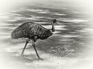 Emu Walking by Elaine Teague
