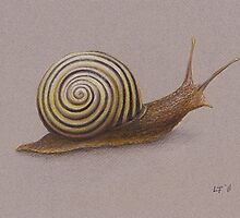 The Snail by LFurtwaengler
