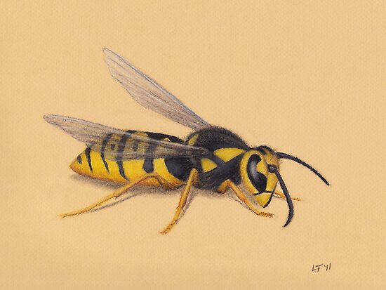 The Wasp by LFurtwaengler