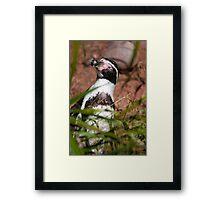 Pick up a Penguin Framed Print