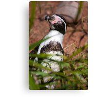 Pick up a Penguin Canvas Print