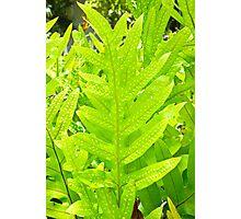 Leafy Maui Photographic Print
