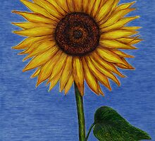 Sunflower by LFurtwaengler
