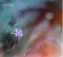 Tiny flower Photographic Print