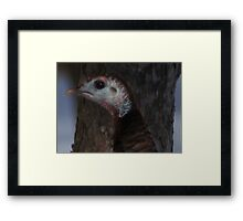 Portrait of a Wisconsin Wild Turkey Framed Print