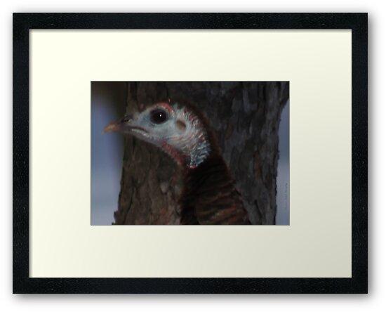 Portrait of a Wisconsin Wild Turkey by Thomas Murphy