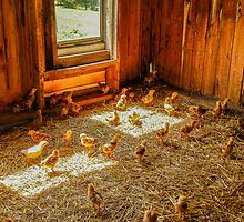 Baby Chicks by Mary Carol Story