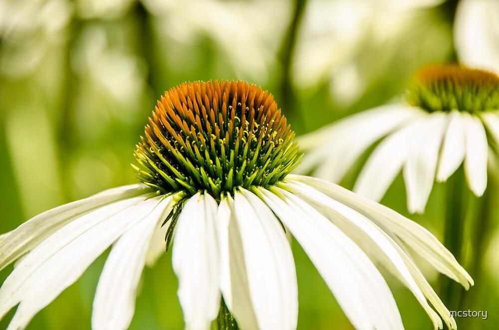 White Coneflower by Mary Carol Story