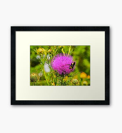Thistle And Bee Framed Print