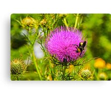 Thistle And Bee Canvas Print
