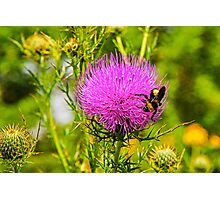 Thistle And Bee Photographic Print