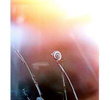 little snail Photographic Print