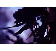Floral Silhouette  Photographic Print