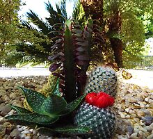 Cactus Potpourri Pricky Desert Plants by artkrannie
