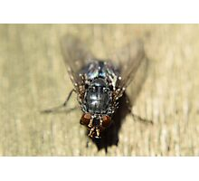 Who said flys are a pest! Photographic Print